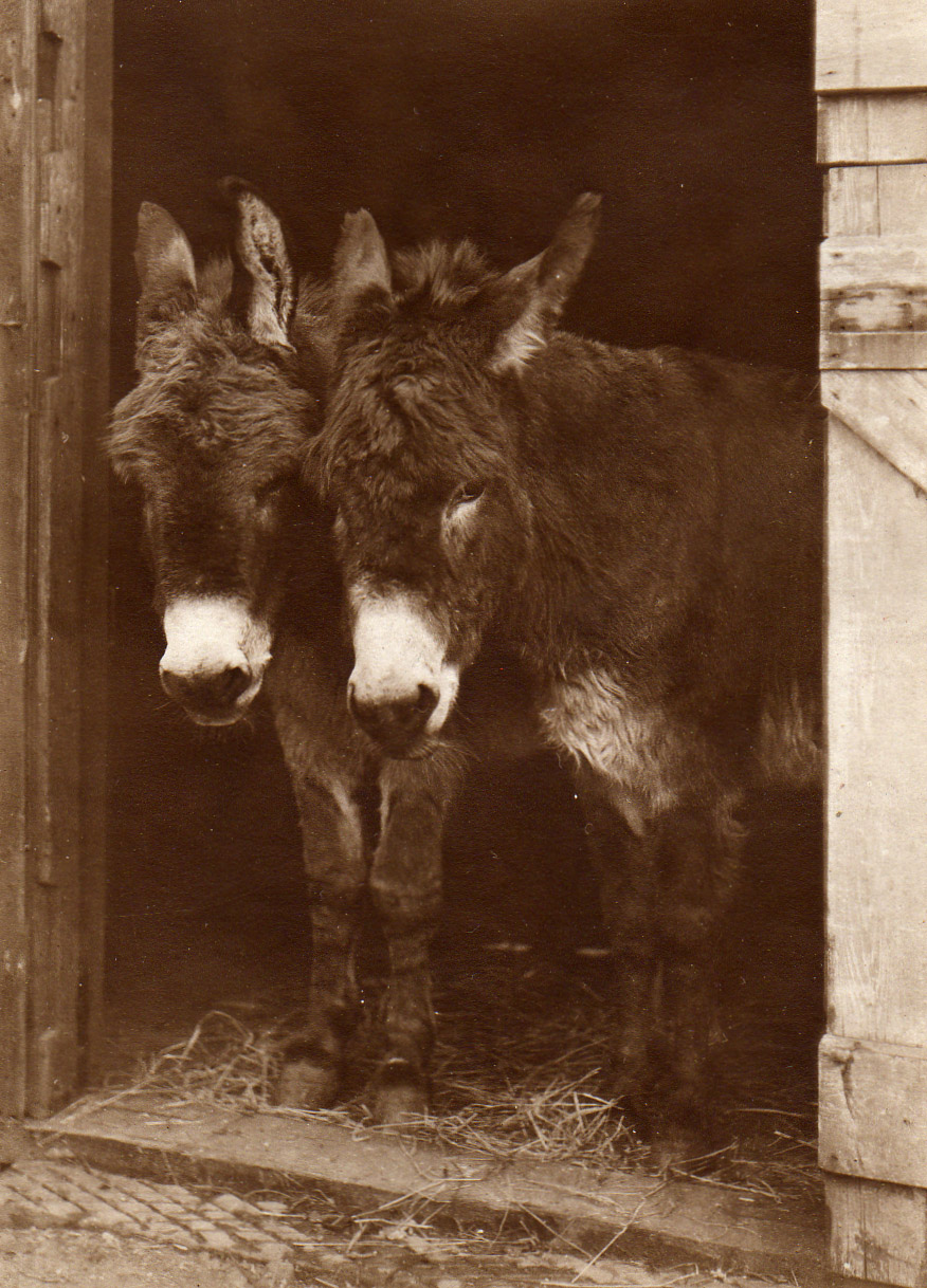 PH01196-donkeys